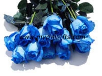 Imported Blue Roses