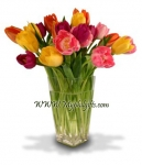 cheerful array of tulips
