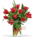 Royal Red Tulip